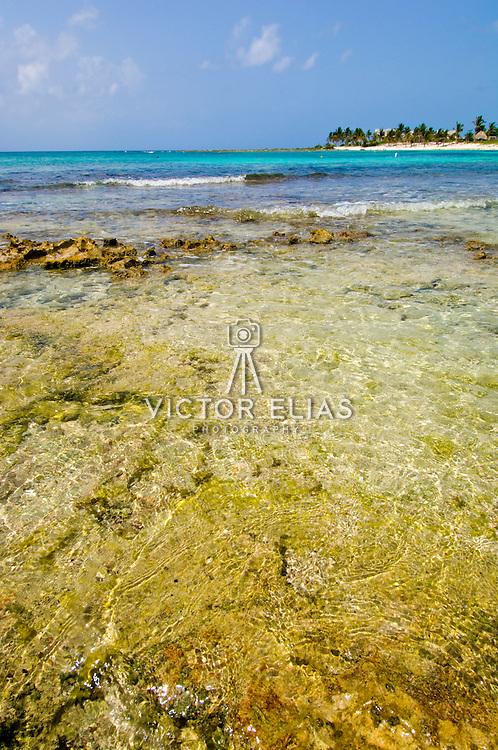 Bay of Paamul. Quintana Roo. Mexico.