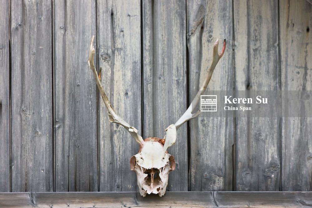 Reindeer skeleton, Bellsund, Spitsbergen, Norway