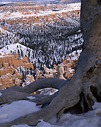 Tree, Tree Trunk, Rock Formations, Sandstone, Rock, Red, Snow, Winter, Bryce Canyon, Canyon, Cliffs, Bryce Canyon National Park, Utah