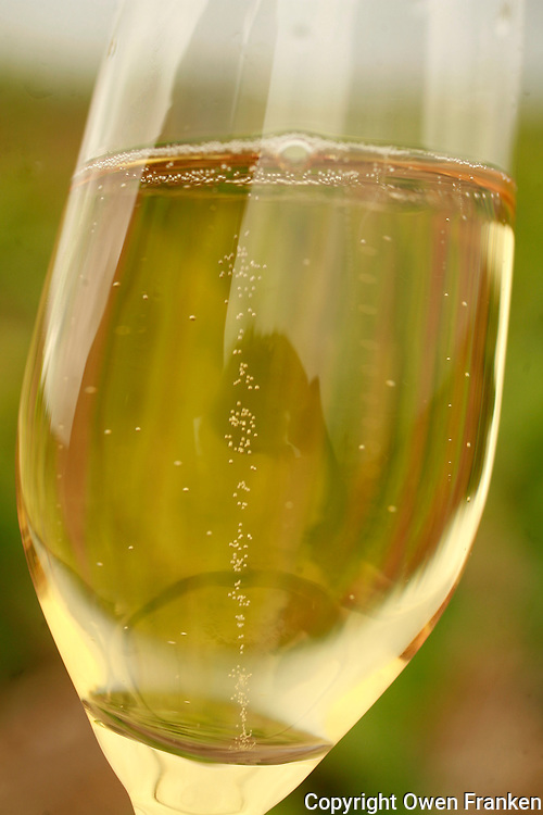 A flute of local Champagne in the vineyards of Unchair, near Reims.Photo by Owen Franken for the NY Times..May 18, 2008
