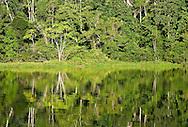 Reflection on oxbow lake, Peruvian Amazon rainforest / Parque Nacional del Manu, Perú