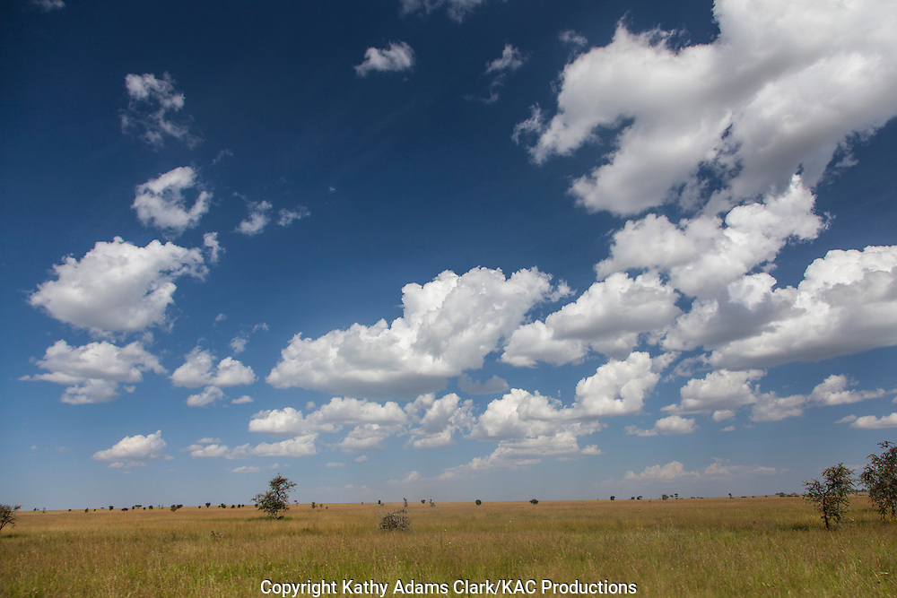 Cumulus clouds, over the Serengeti, with acacia trees, Tanzania, Africa.