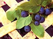 Alaska. Freshly baked blueberry pie garnished with wild blueberries.