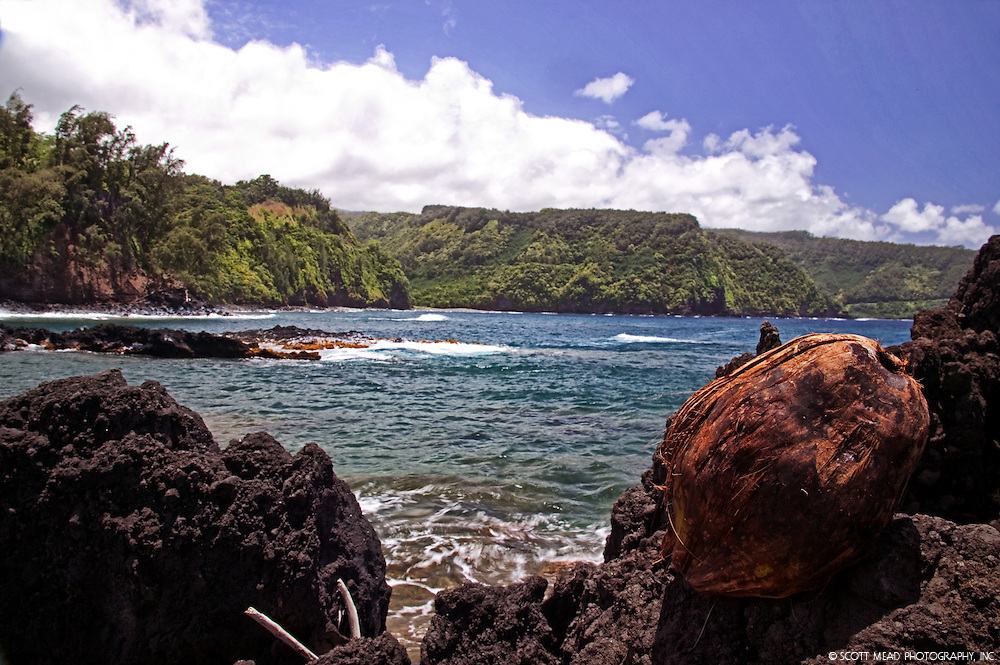 Coconut and bay, view of Hana Highway, Keanae, Maui, Hawaii