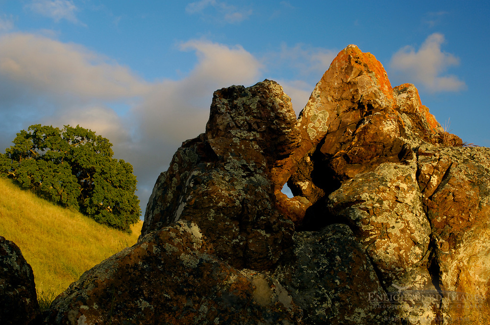 Lone oak tree and lichen covered rock at sunset, Mount Diablo State Park, California