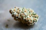 En torkad blomknopp från plantan cannabis sativa