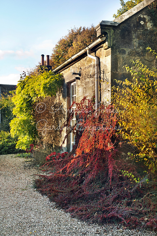 Entrance gravel drive to front door of house with plants including Wisteria, Cotoneaster and Kerria