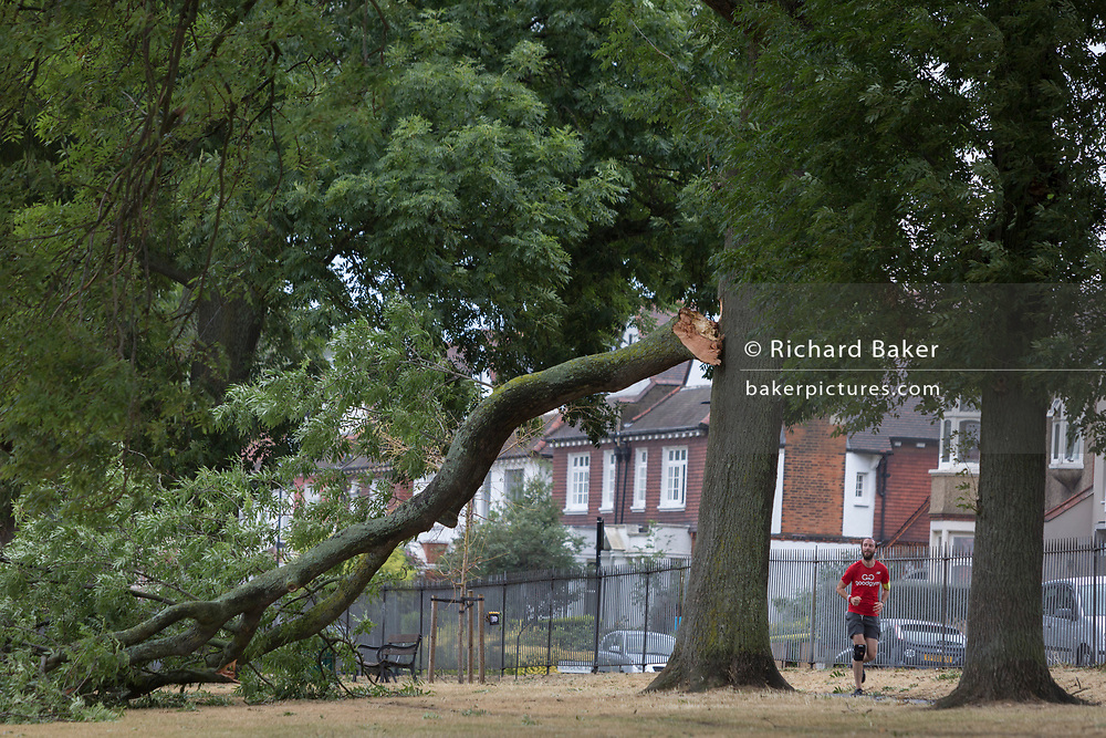 A jogger looks up to where a large branch of a 100 year-old ash tree in full leaf has detached and fallen during strong overnight winds, following the UK heatwave which ended over the weekend, on 29th July 2018, in London, England.