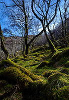 SCOTLAND - CIRCA APRIL 2016: Trees and moss field near Tarskavaig in Skye an Island in Scotland