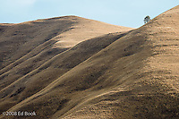 Rolling Hills rangeland in the Grande Ronde River highlands with a single tree, Asotin County, Washington, USA