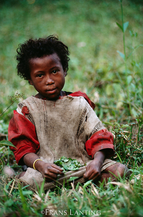 Young girl collecting medicinal herbs for export, Eastern Madagascar