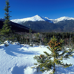 Mt. Adams. Spruce. Winter in the Presidential Range of NH's White Mountain National Forest.  Mt. Washington, NH.  Lowe's Bald Spot.