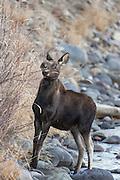 Shira's moose