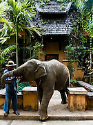 Mahout and his baby elephant on the grounds  of Anantara Golden Triangle resort.