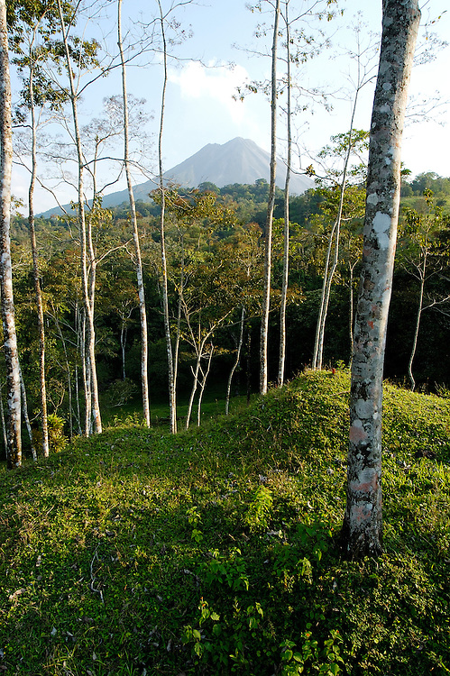 Arenal Volcano and forest