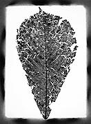 A crumbling leaf