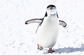 Antarctica ice and life