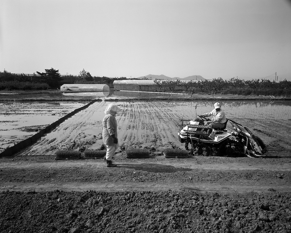 Kuniko (64) and Yoshio 70  Suzuki  Plant  rice in Iizakamachi just  outside of Fukushima city. Given the OK to  plant  after levels of radiation were deemed low enough to not be of risk  to human health.<br /> Farmers here claim their produce is safe,  the country has become hysterical about the Fukushima contamination. Farmers all over the region feel that even though their produce is safe it will fetch  low prices    or be refused altogether.