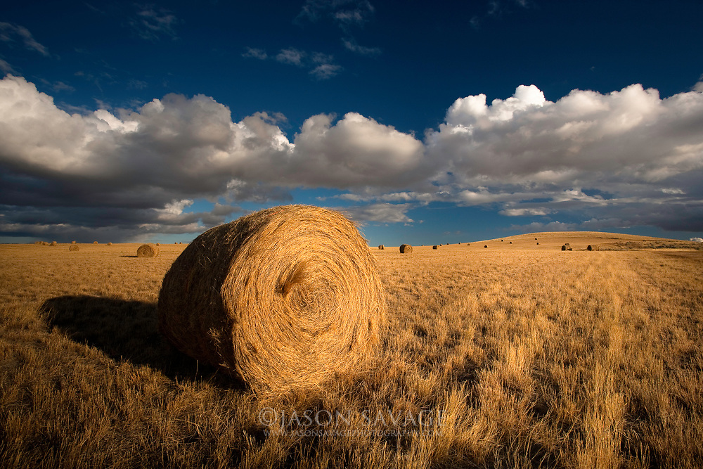 Montana Hay Bales