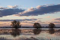 Winter Sunset, Merced National Wildlife Refuge, California