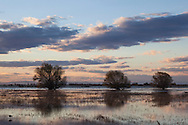 Winter Sunset, Merced National Wildlife Refuge, California