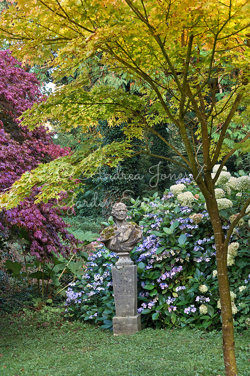 Herm with Hydrangea cvs and Japanese maples at Glin Castle, Ireland