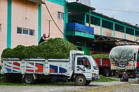 Turquie, la région de la Mer Noire, Anatolie, fabrique de thé dans la région de Trabzon // Turkey, the Black Sea region, tea factory near Trabzon