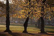 A person walks through an autumnal Ruskin Park in the south London borough of Lambeth.