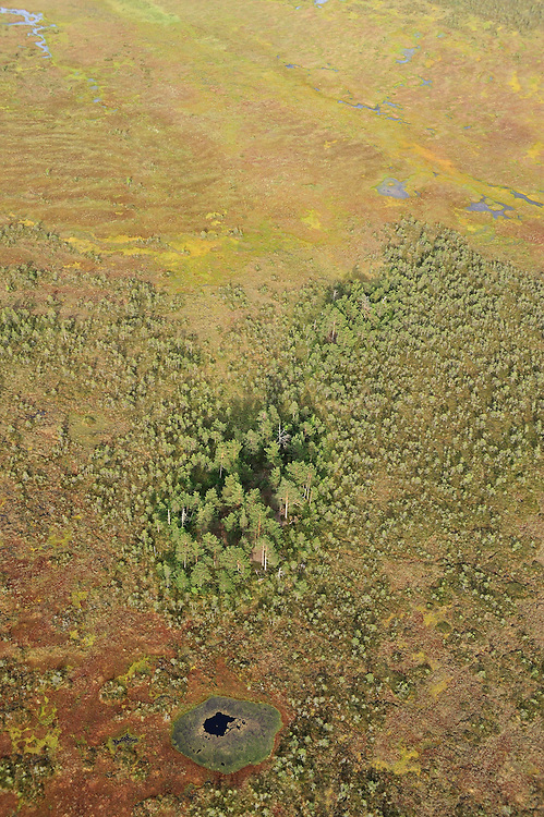 Kemeri National Park, Bog forest, Latvia