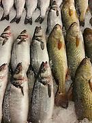 a display of Fresh fish on ice