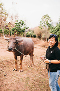 Neeracha Wongmasa with water buffalo at Phunacome resort
