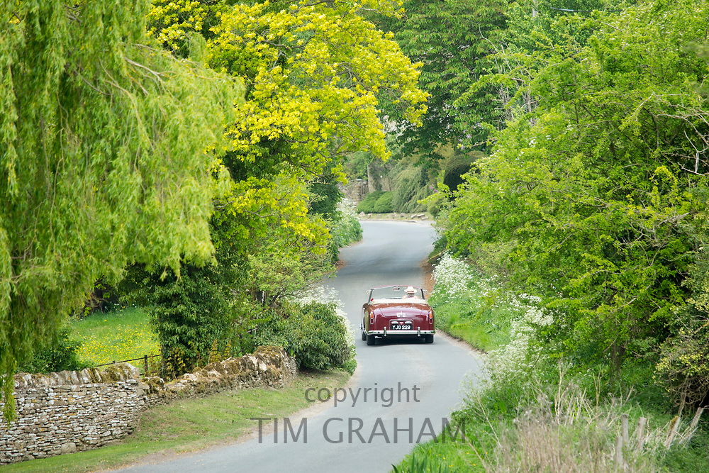 Motorist driving away in a British made Alvis TD21 drop head coupe classic car along a country lane in The Cotswolds, England