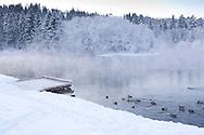 Ender i vannet nedenfor Nedre Leirfoss.