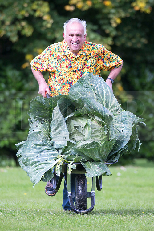 © Licensed to London News Pictures. 15/09/2017. Harrogate UK. Ian Neale with his prize winning Cabbage at the Giant Vegetable competition at this years Harrogate Autumn Flower Show in Yorkshire. Photo Credit: Andrew McCaren/LNP