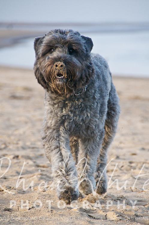 Dog photos by Brighton Dog Photography