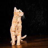 Pet images for stock licensing