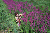 07/21/99----Lincoln,Ma.---Nature Photography---Sudbury Valley--Betsy Moyer, a member of the Sudbury Valley Nature Photographers Club photographs a bee during an outing in Lincoln. (reporter/Marty Carlock)..library tag  08081999  west weekly