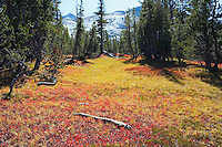 Fall in Tuolumne Meadows Yosemite National Park near Cathedral Lake Sierra Nevada Range California USA.