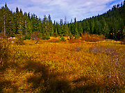 Yurtmeister Meadow near the Mount Tahoma Trails Yurt in the Washington State Department of Natural Resources Tahoma State Forest school trust lands.  The hut-to-hut crosscountry ski and snowshoe trail system is operated by the all volunteer Mount Tahoma Trails Association in the Cascade Mountain Range near Mount Rainier National Park, WA, USA