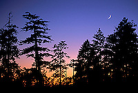 Silhouette of trees and moon in Yosemite National Park, CA.