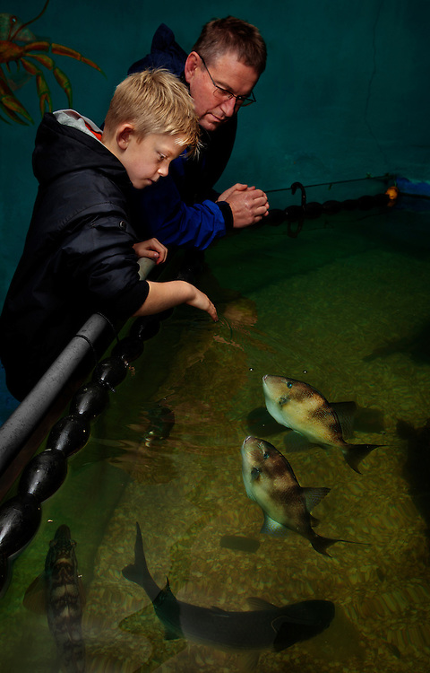 Tourists in the Aquarium in Port Isaac, Cornwall, U.K.<br /> <br /> Tourism continues to play an increasingly important role in the economy of Port Isaac, and the fishing activity is still one of its major attractions.