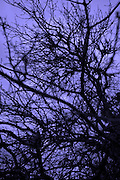 Abstract or tree branches in twilight.