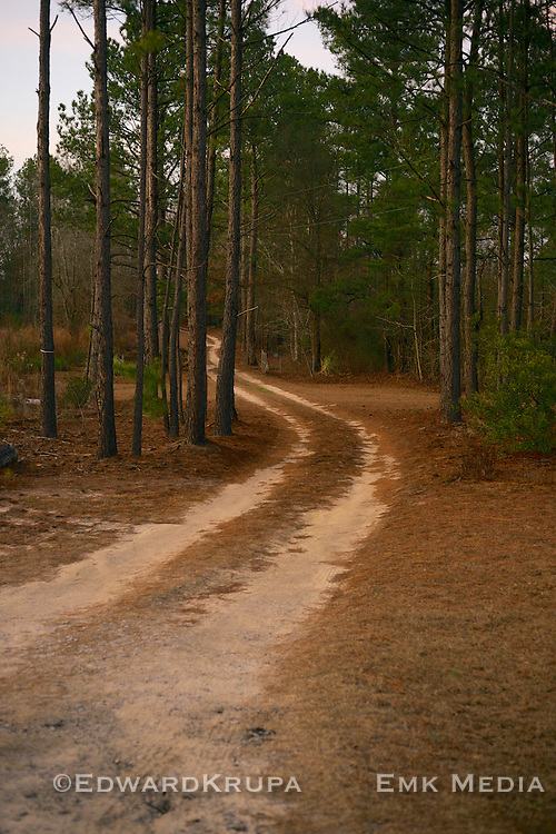 Dirt road into the woods.