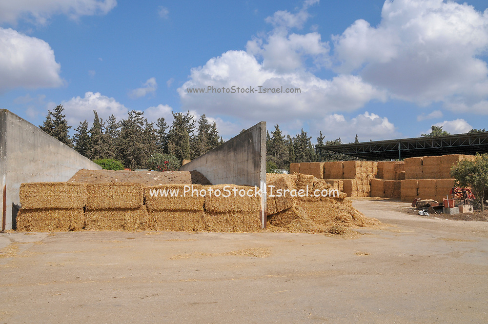 Bales of straw in storage in a dairy farm. Photographed at Kibbutz Harduf, Galilee, Israel