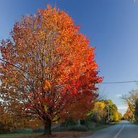 http://Duncan.co/fall-colour-on-lake-street