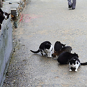 Street Cats and Dogs in Greece