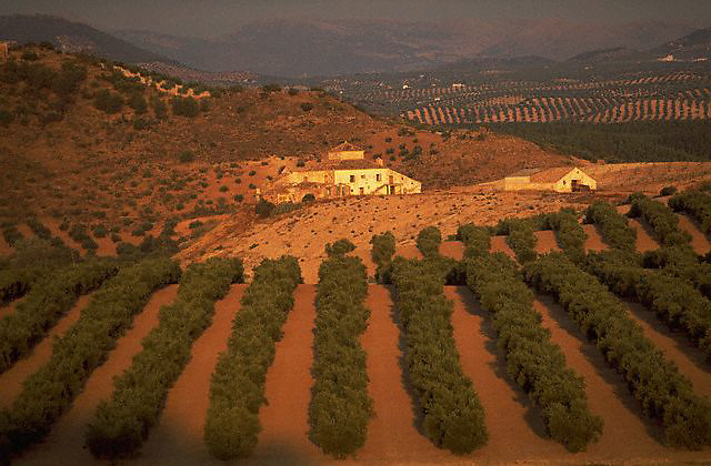 September 1991, Cordoba Province, Andalusia, Spain --- Fields of olive trees and farmhouses in the region of Cordoba, Spain. --- Image by © Owen Franken/CORBIS