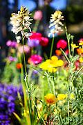 flowering garden. Yellow blooming flowers