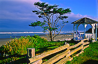 Sitka Spruce tree and gazebo at Kalaloch Beach near Kalaloch Lodge.  Olympic National Park, Washington, USA.