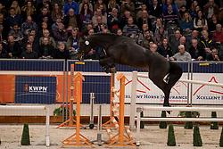 147 - Jonkheer de Span<br /> KWPN Hengstenkeuring 2017<br /> © Dirk Caremans<br /> 01/02/2017